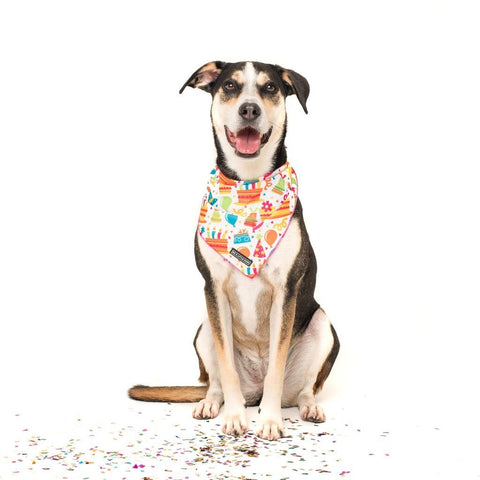 Image of Big-and-Little-Dogs-Cooling-Neckerchief-Bandana-Birthday-Cake-Luna
