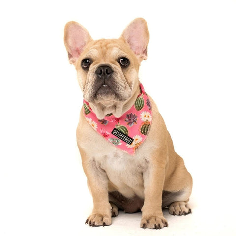 Image of Big-and-Little-Dogs-Cooling-Neckerchief-Bandana-Plant-One-On-Me-Lucy