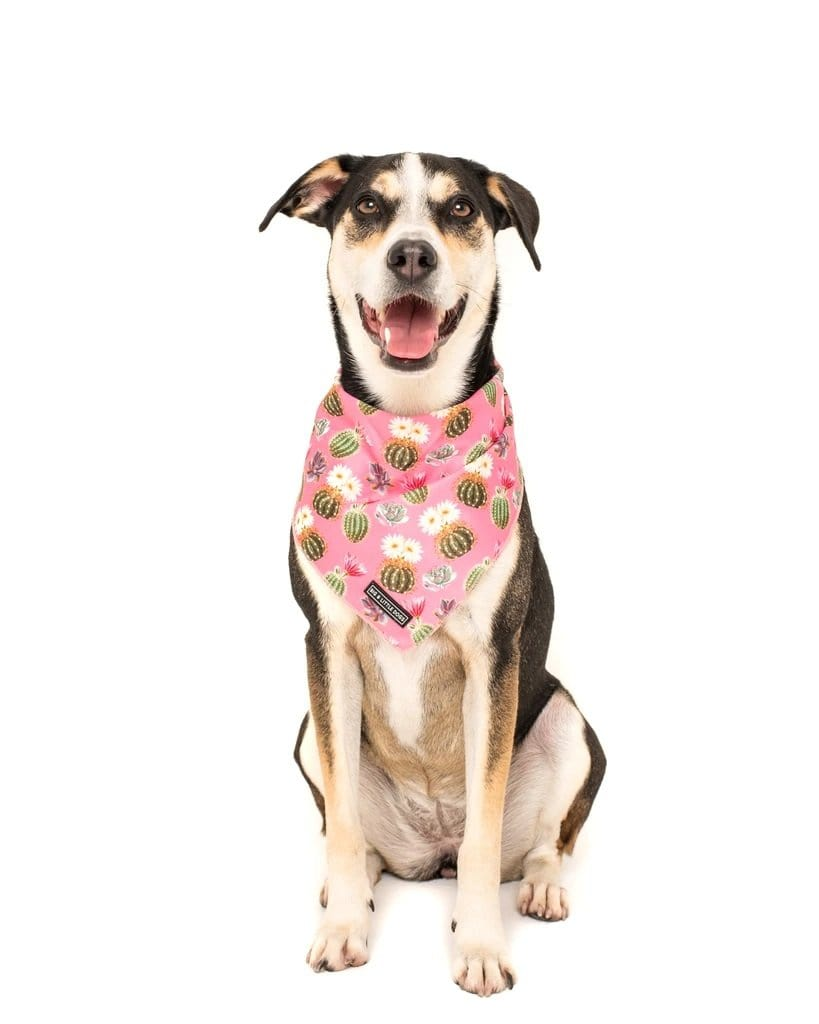 Big-and-Little-Dogs-Cooling-Neckerchief-Bandana-Plant-One-On-Me-Luna