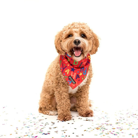 Image of Big-and-Little-Dogs-Cooling-Neckerchief-Bandana-Red-Birthday-Harvey