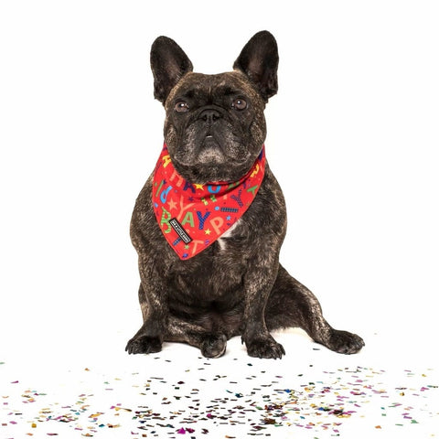 Image of Big-and-Little-Dogs-Cooling-Neckerchief-Bandana-Red-Birthday-Toby