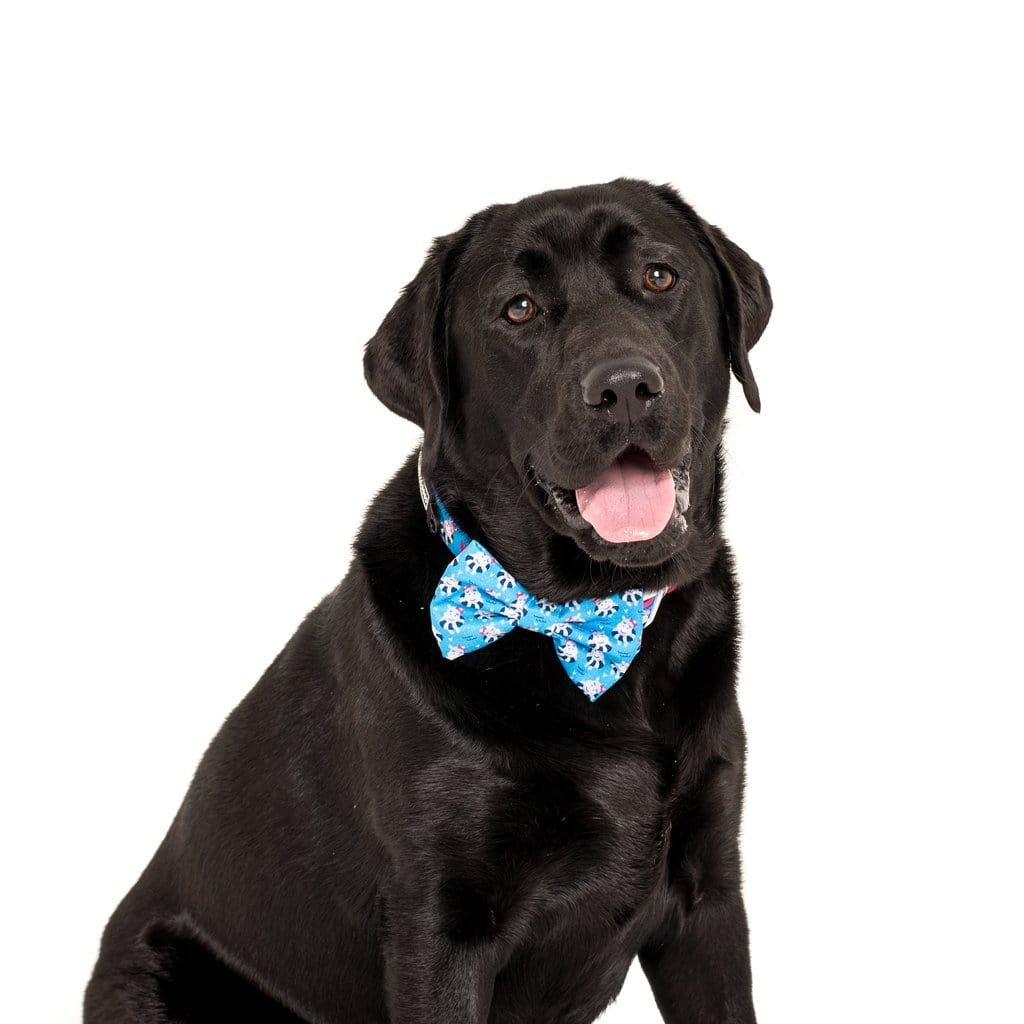 Big-Little-Dogs-Comfort-Dog-Collar-and-Bow-Tie-Feeling-Nauti-Bella