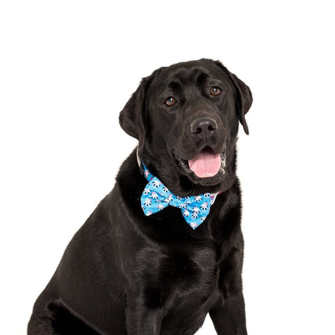 Image of Big-Little-Dogs-Comfort-Dog-Collar-and-Bow-Tie-Feeling-Nauti-Bella