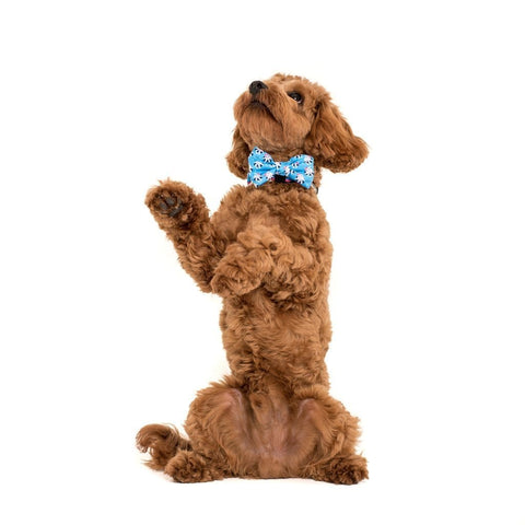 Image of Big-Little-Dogs-Comfort-Dog-Collar-and-Bow-Tie-Feeling-Nauti-Chino-2