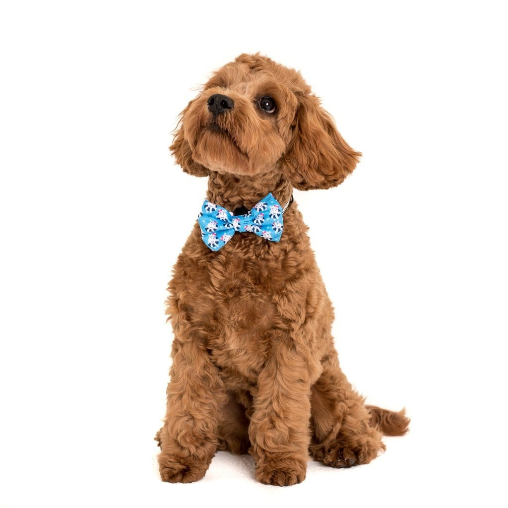 Big-Little-Dogs-Comfort-Dog-Collar-and-Bow-Tie-Feeling-Nauti-Chino