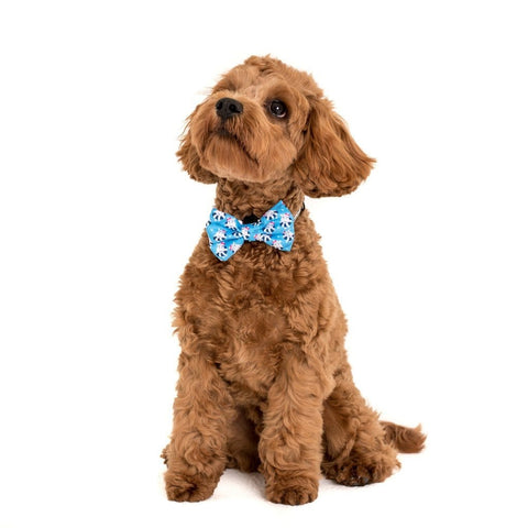 Image of Big-Little-Dogs-Comfort-Dog-Collar-and-Bow-Tie-Feeling-Nauti-Chino