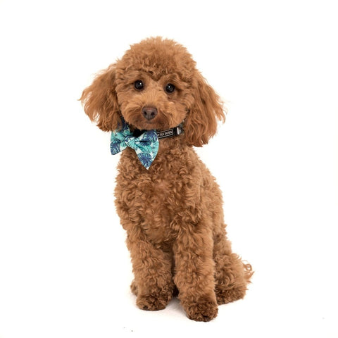 Image of Big-Little-Dogs-Comfort-Dog-Collar-and-Bow-Tie-Miami-Summer-Coco