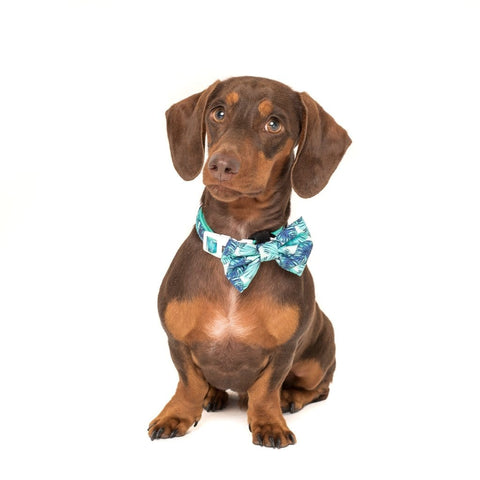 Image of Big-Little-Dogs-Comfort-Dog-Collar-and-Bow-Tie-Miami-Summer-Rupert