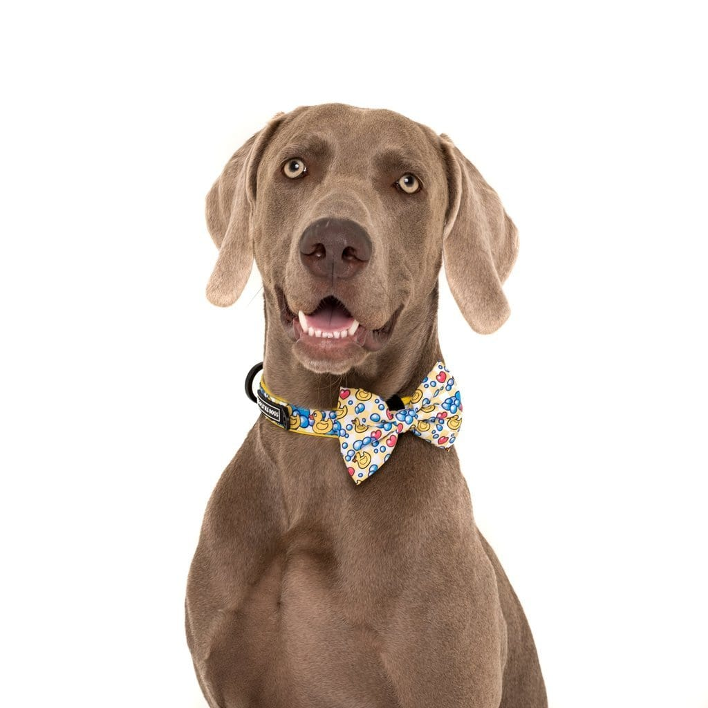 Big-Little-Dogs-Comfort-Dog-Collar-and-Bow-Tie-Rubber-Duck-Hank-2