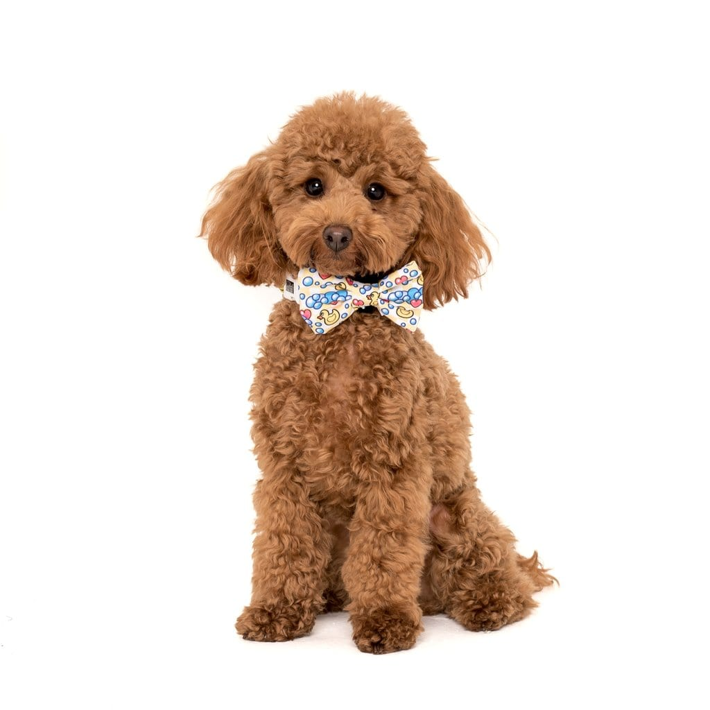 Big-Little-Dogs-Comfort-Dog-Collar-and-Bow-Tie-Rubber-Ducky-Coco