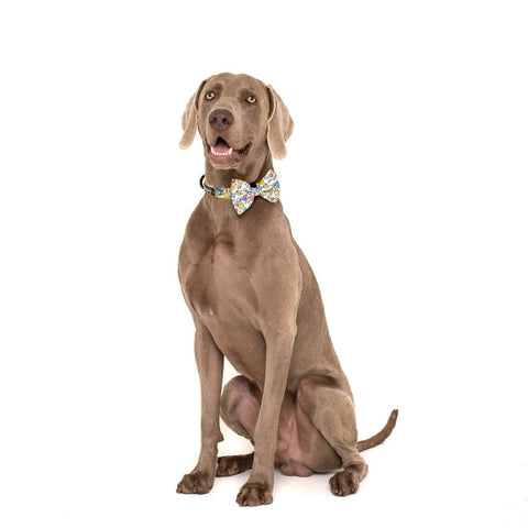Image of Big-Little-Dogs-Comfort-Dog-Collar-and-Bow-Tie-Rubber-Ducky-Hank