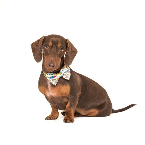Image of Big-Little-Dogs-Comfort-Dog-Collar-and-Bow-Tie-Rubber-Ducky-Rupert-2