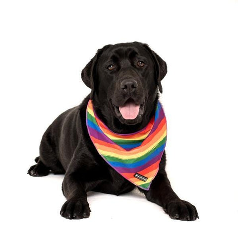 Image of Big-Little-Dogs-Cooling-Dog-Neckerchief-Bandana-Rainbow-Pride-Bella_grande