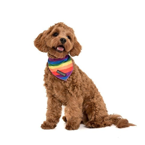 Image of Big-Little-Dogs-Cooling-Dog-Neckerchief-Bandana-Rainbow-Pride-Chino_grande