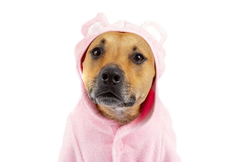 Image of Big-Little-Dogs-Dog-Bath-Robe-Pretty-In-Pink-Kiba-2