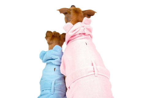 Image of Big-Little-Dogs-Dog-Bath-Robe-Pretty-In-Pink-and-Baby-Blues-Kiba-and-Moochi-2-Back-View