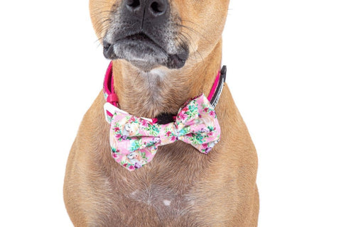 Image of Big-Little-Dogs-Dog-Collar-and-Bow-Tie-Born-to-be-a-Unicorn