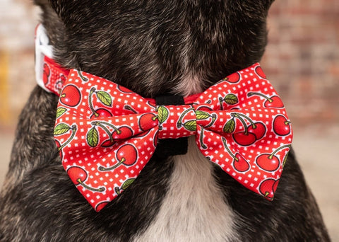 Image of Big-Little-Dogs-Dog-Collar-and-Bow-Tie-Cherrylicious-Close-Up