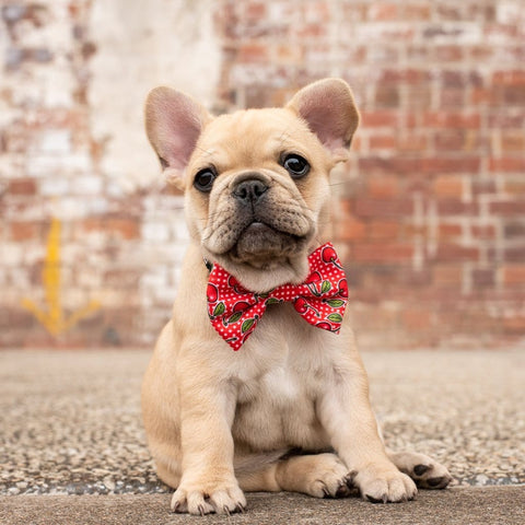 Image of Big-Little-Dogs-Dog-Collar-and-Bow-Tie-Cherrylicious-Lucy-1