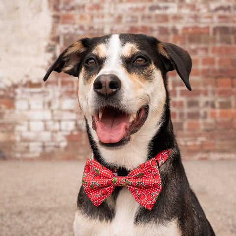 Image of Big-Little-Dogs-Dog-Collar-and-Bow-Tie-Cherrylicious-Luna-2