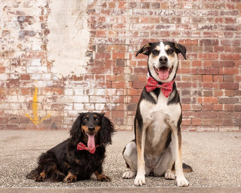 Image of Big-Little-Dogs-Dog-Collar-and-Bow-Tie-Cherrylicious-Luna-and-Moose