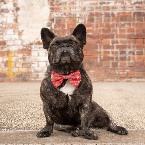 Image of Big-Little-Dogs-Dog-Collar-and-Bow-Tie-Cherrylicious-Toby-1