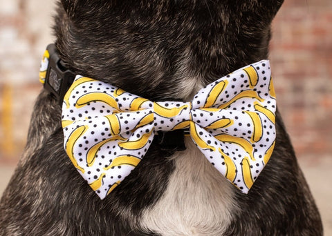 Image of Big-Little-Dogs-Dog-Collar-and-Bow-Tie-Going-Bananas-Close-Up