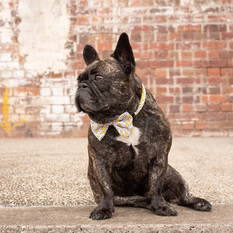 Image of Big-Little-Dogs-Dog-Collar-and-Bow-Tie-Going-Bananas-Toby-1