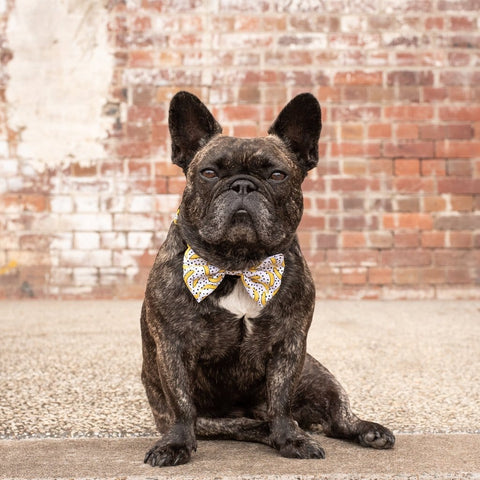 Image of Big-Little-Dogs-Dog-Collar-and-Bow-Tie-Going-Bananas-Toby-2