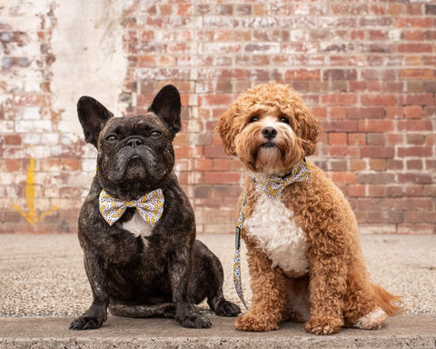 Image of Big-Little-Dogs-Dog-Collar-and-Bow-Tie-Going-Bananas-Toby-and-Harvey