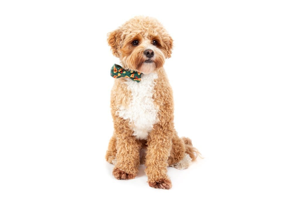Big-Little-Dogs-Dog-Collar-and-Bow-Tie-Pupperoni-Pizza-Harvey