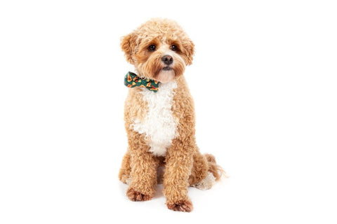 Image of Big-Little-Dogs-Dog-Collar-and-Bow-Tie-Pupperoni-Pizza-Harvey