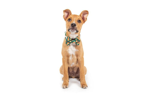 Image of Big-Little-Dogs-Dog-Collar-and-Bow-Tie-Pupperoni-Pizza-Mochi