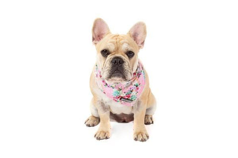 Image of Big-Little-Dogs-Dog-Cooling-Bandana-Born-To-Be-A-Unicorn-Lucy_grande