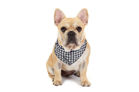 Image of Big-Little-Dogs-Dog-Cooling-Bandana-Houndstooth-Squad-Lucy