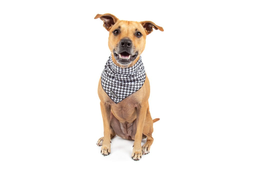 Big-Little-Dogs-Dog-Cooling-Bandana-Houndstooth-Squad