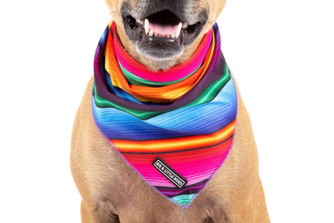 Image of Big-Little-Dogs-Dog-Cooling-Bandana-Mexican-Sarape-Close-Up