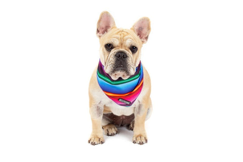 Image of Big-Little-Dogs-Dog-Cooling-Bandana-Mexican-Sarape-Lucy