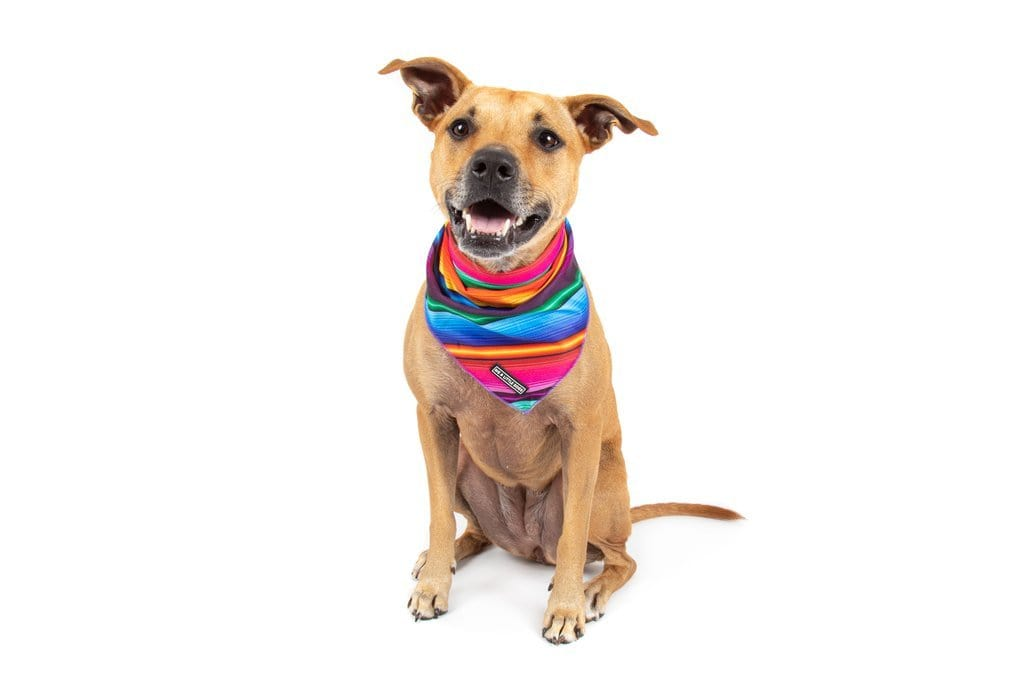 Big-Little-Dogs-Dog-Cooling-Bandana-Mexican-Sarape