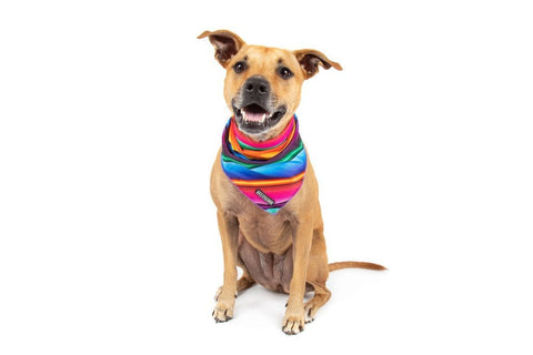 Image of Big-Little-Dogs-Dog-Cooling-Bandana-Mexican-Sarape