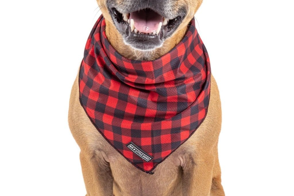 Big-Little-Dogs-Dog-Cooling-Bandana-Plaid-To-The-Bone-Close-Up