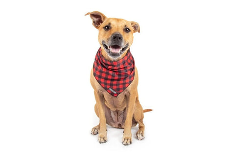 Image of Big-Little-Dogs-Dog-Cooling-Bandana-Plaid-To-The-Bone