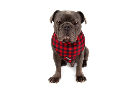 Image of Big-Little-Dogs-Dog-Cooling-Bandana-Plaid-to-the-Bone-Rem