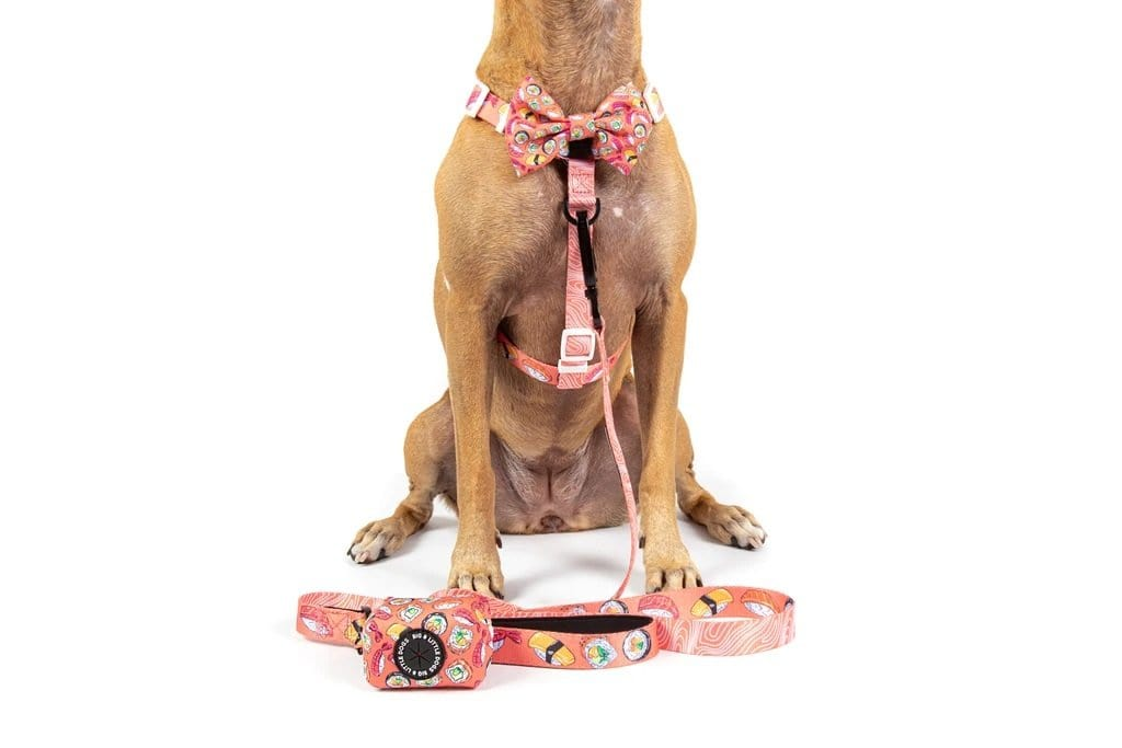 Big-Little-Dogs-Dog-Strap-Harness-and-Poop-Bag-Holder-Sashimi