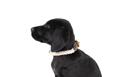 Image of Mog-and-Bone-Leather-and-Brass-Rope-Collar-Natural-Perfect-Everyday-Walking-Collar