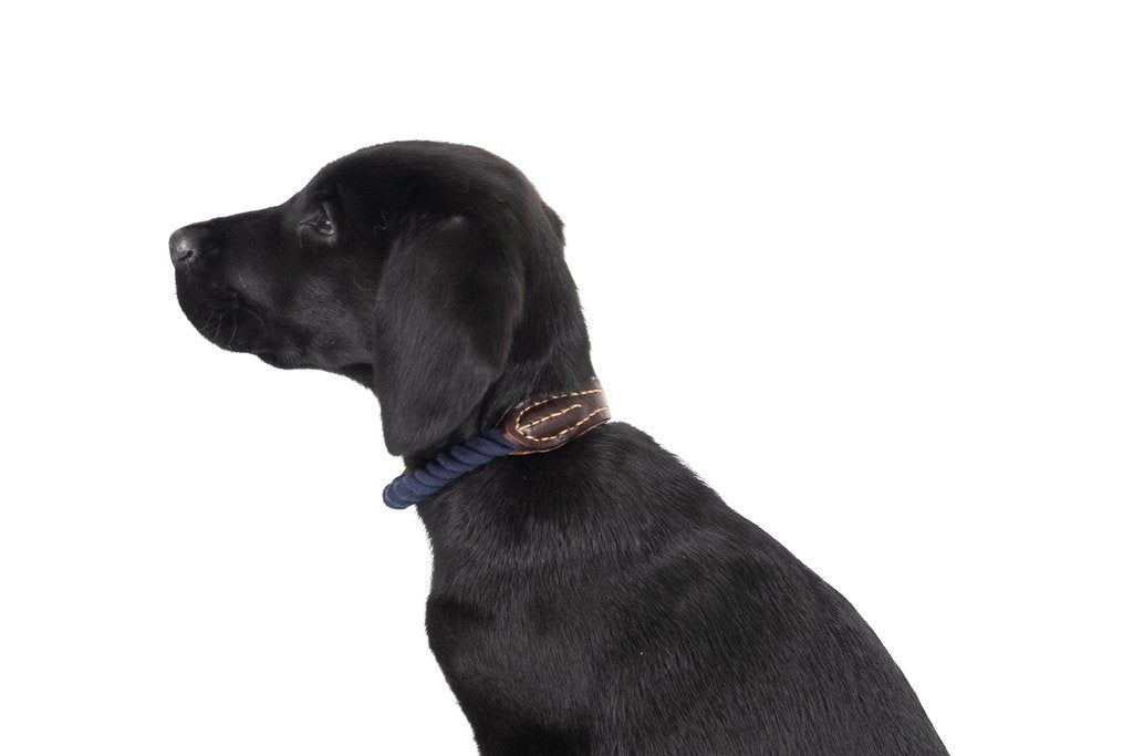 Mog-and-Bone-Leather-and-Brass-Rope-Collar-Navy-Perfect-Everyday-Waling-Collar