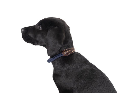 Image of Mog-and-Bone-Leather-and-Brass-Rope-Collar-Navy-Perfect-Everyday-Waling-Collar