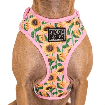 Image of Big-and-Little-Dogs-Adjustable-Dog-Harness- You-Are-My-Sunshine-1