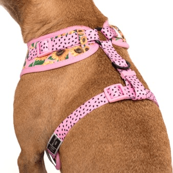 Image of Big-and-Little-Dogs-Adjustable-Dog-Harness- You-Are-My-Sunshine-2