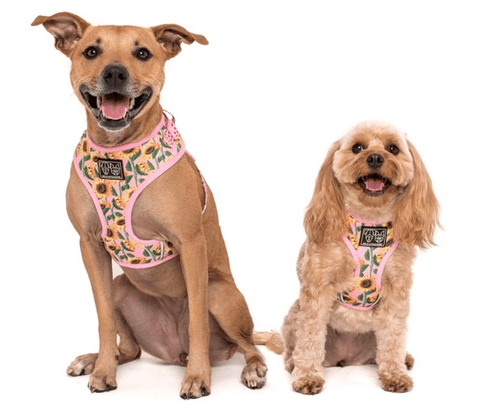 Image of Big-and-Little-Dogs-Adjustable-Dog-Harness- You-Are-My-Sunshine-3
